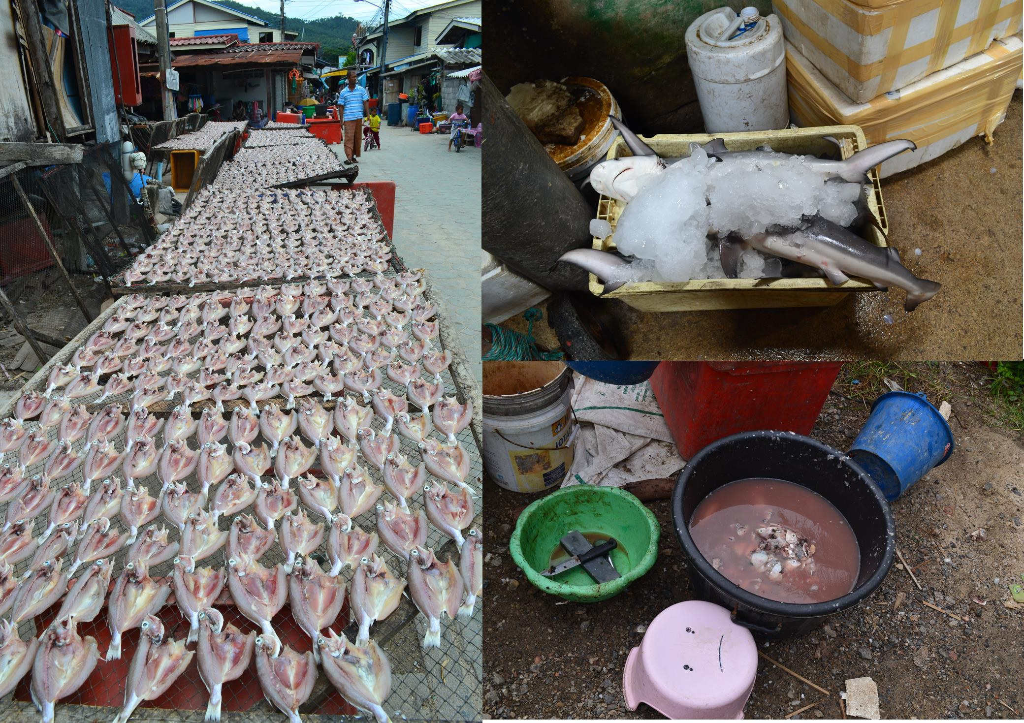 Koh Samui Muslim fishing vilage